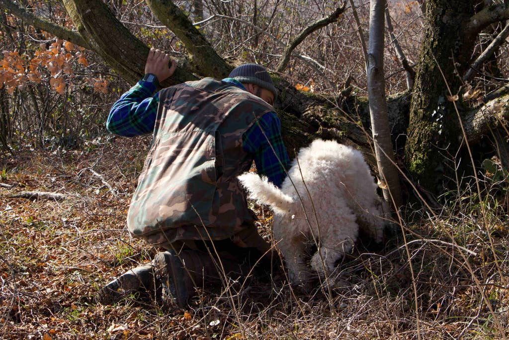Where to go Truffle Hunting in Italy