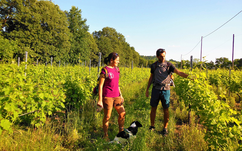 Trekking and picnic in the vineyards